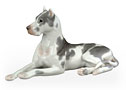 The harlequin Great Dane is noted for elegant gray markings splayed across a white coat.