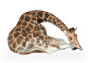 Giraffe Figurine w/ Head Down